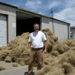 Needle & Threadgrass