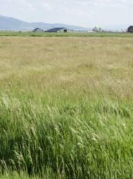 Dryland Pasture Seed Mix