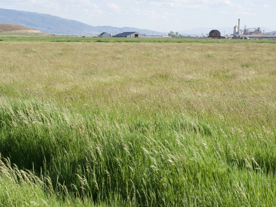 field of Dryland pasture seed mix