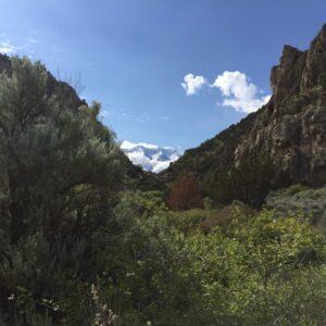 Basin Big Sagebrush (Artemisia tridentata tridentata)