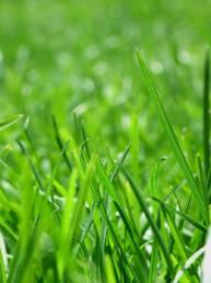Lawn and Turf Blend (5 lb. Bag)