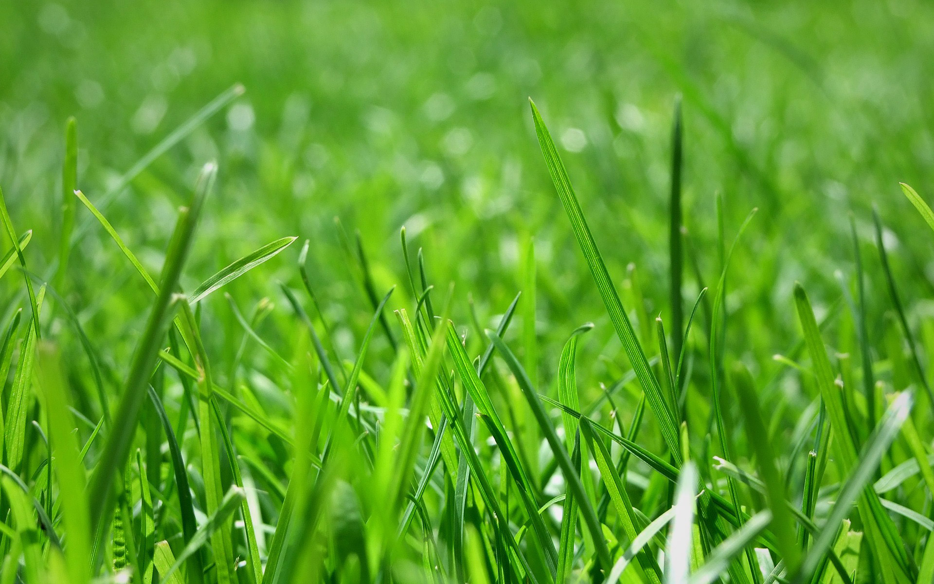 Lawn And Turf Blend Great Basin Seeds