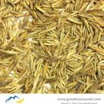 Close up photo Dryland Pasture Seed Mix