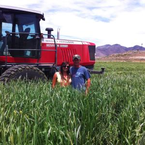 Fall Prosper Forage Mixture near Delta, Utah