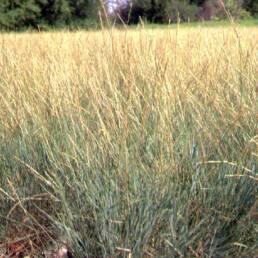 Loren St. John @ USDA-NRCS PLANTS Database