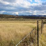 Dryland Pasture Seed Mix landscape