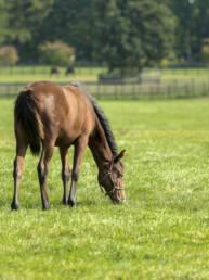 Horse Pasture Mix