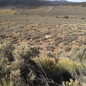 Wyoming Big Sagebrush (foreground) and Black Sagebrush (middle of photo and far ridge line) Fish Lake Mountain, UT