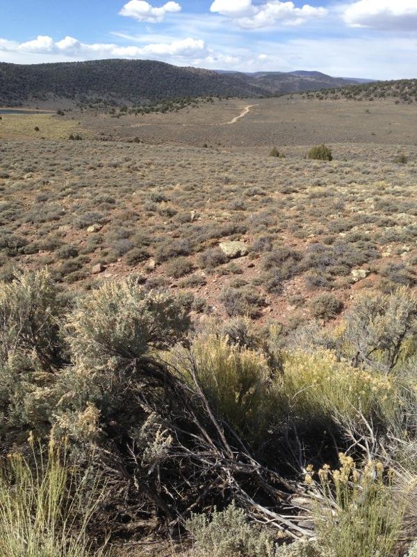 Wyoming Big Sagebrush (foreground) and Black Sagebrush (middle of photo and far ridge line) Fish Lake Mountain, UT