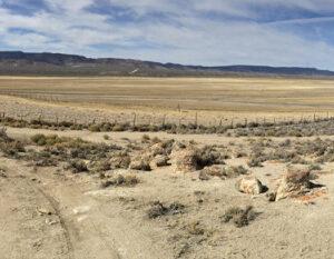 Salt & Alkali Soils Pasture Mix, Salt and Alkali Soils Seed