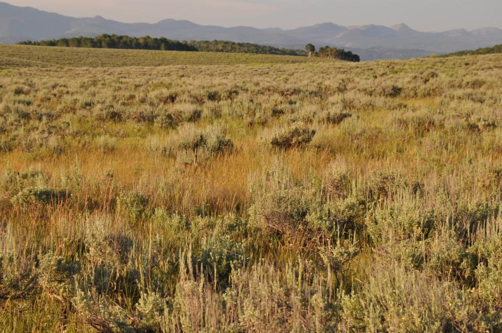 Wolf Creek Sage and Mountain Shrub Seed Mix