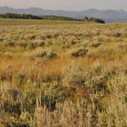 Wolf Creek Sage and Mountain Shrub Seed Mix