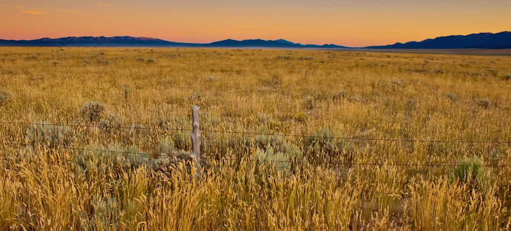 Dryland Crested Wheatgrass rangeland, Nevada