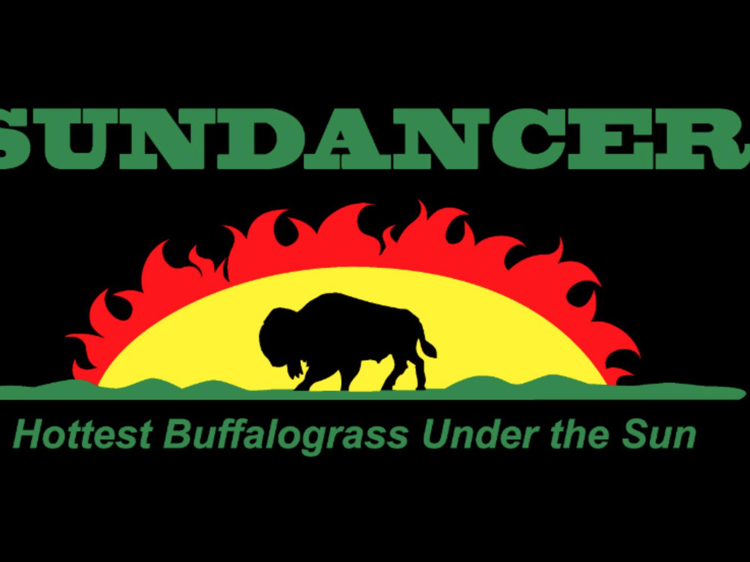 Sundancer Buffalograss