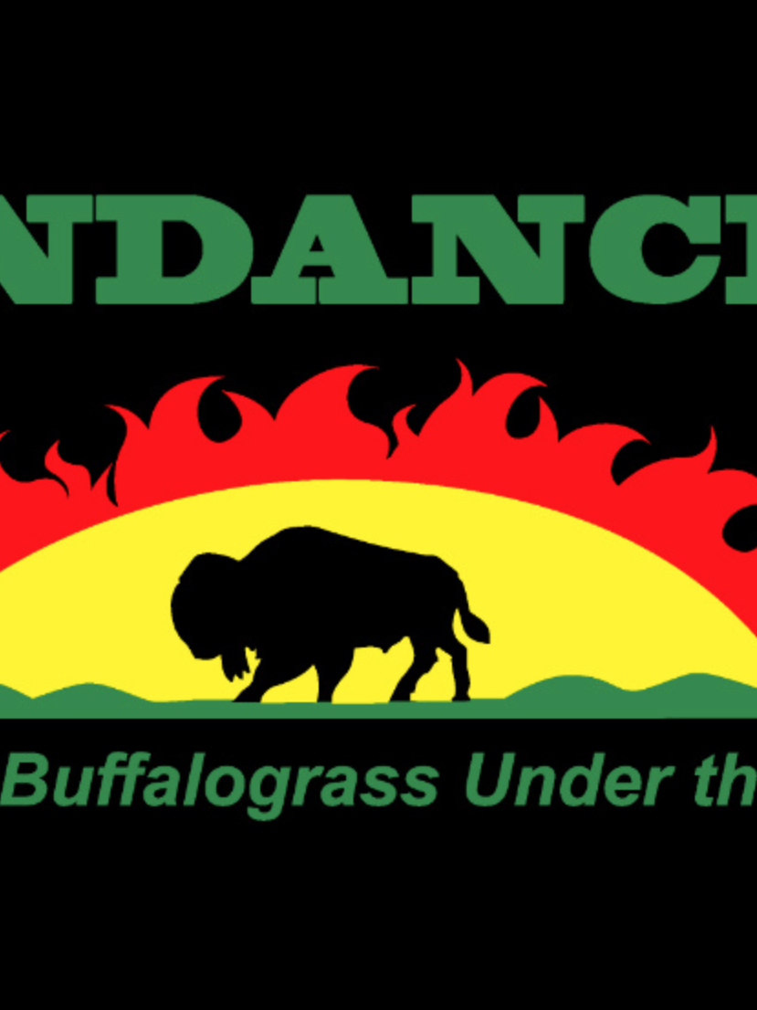 Sundancer Buffalograss