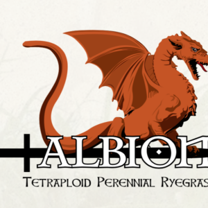 Albion Perennial Reygrass