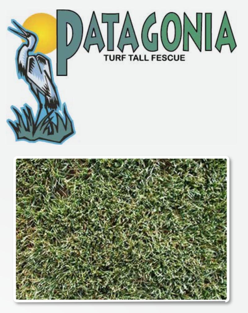Patagonia Tall Fescue