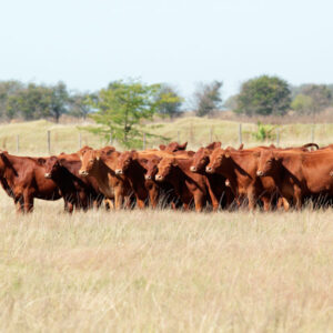 Great Plains Pasture Mix