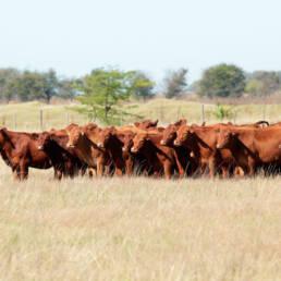 Great Plains Pasture Mix
