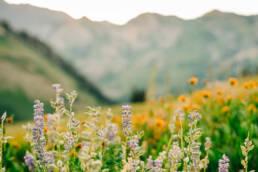 Great Basin Wildflower Mix, regional wildflower mixes