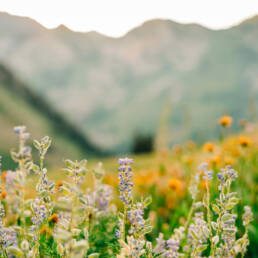 Great Basin Wildflower Mix, regional wildflower mixes