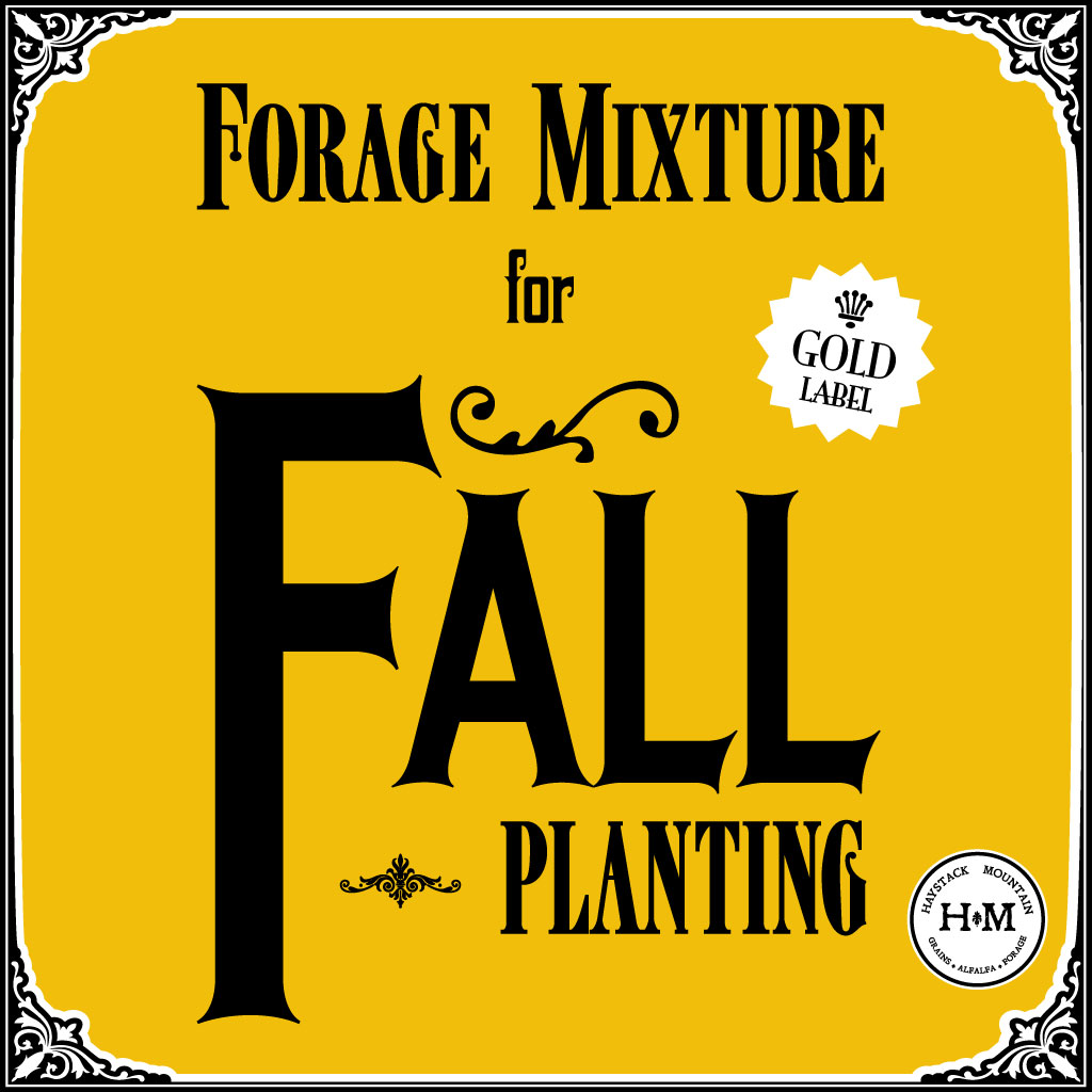 fall forage blend