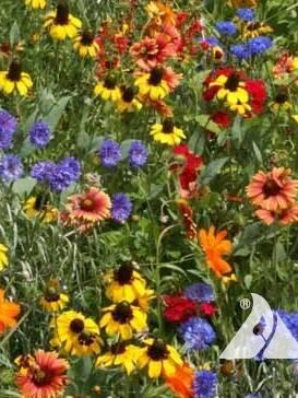 Southeast Wildflower Mix
